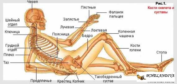Как лечить сосной суставы препарат для суставов у животных