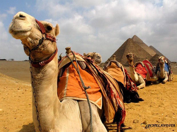 Новогодние туры в Египет на Новый год Огненного Петуха 2017