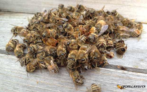 Как употреблять мёртвых пчёл
