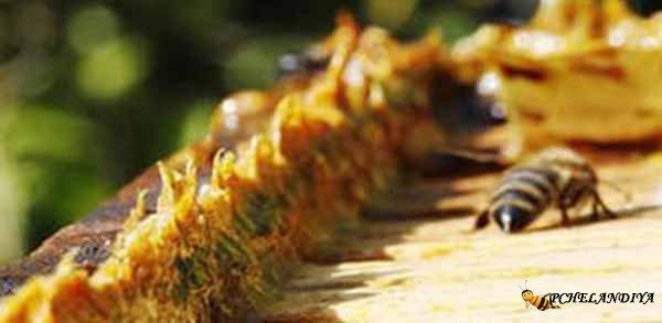 настойка прополиса от паразитов отзывы